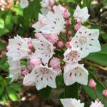 Mountain Laurel Massage & Body Therapy